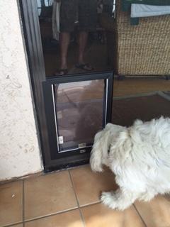 A Puppy Inspecting his new Hale Pet Door