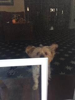 Peek a Boo through a Hale Screen Model Pet Door