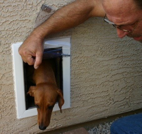 Training a Dog to Use a Hale Pet Door