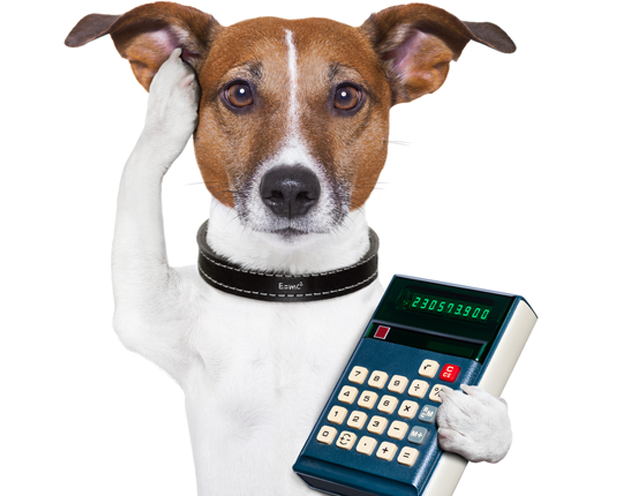 Dog with Calculator for Pricing