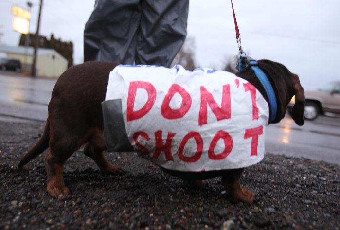 puppy josh wieder protest puppycide