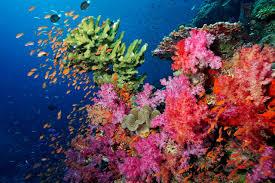 Fiji Trip 2021 Volivoli Beach Resort
