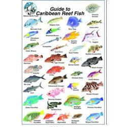 CARIBBEAN FISH ID SLATES - 6 X 9