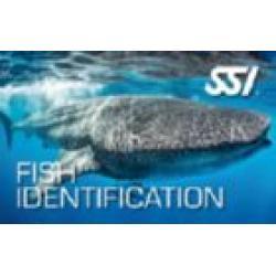 FISH IDENTIFICATION KIT