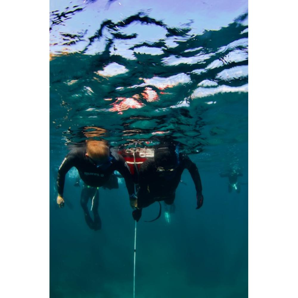 SSI Level 2 Free Diving must purchase Digital Download