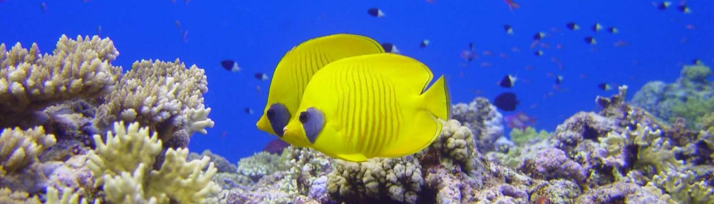 Marine Life Awareness