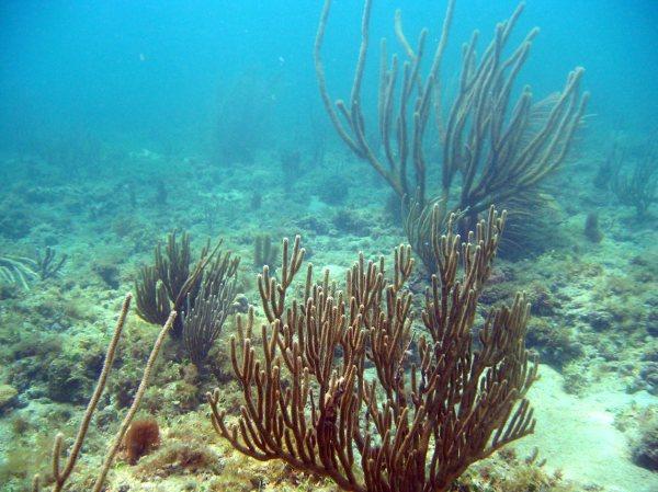 October 9th: Vista Park Beach Dive