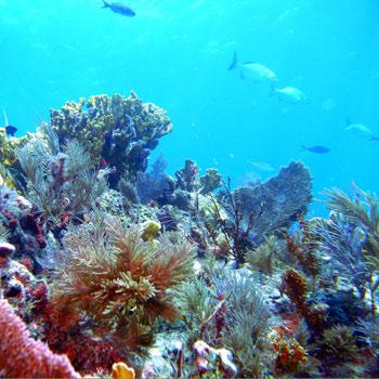 May 8th: Horizon Divers 2-Tank Reef Dive