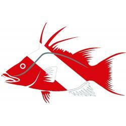 Innovative Scuba Die Cut Hogfish Decal