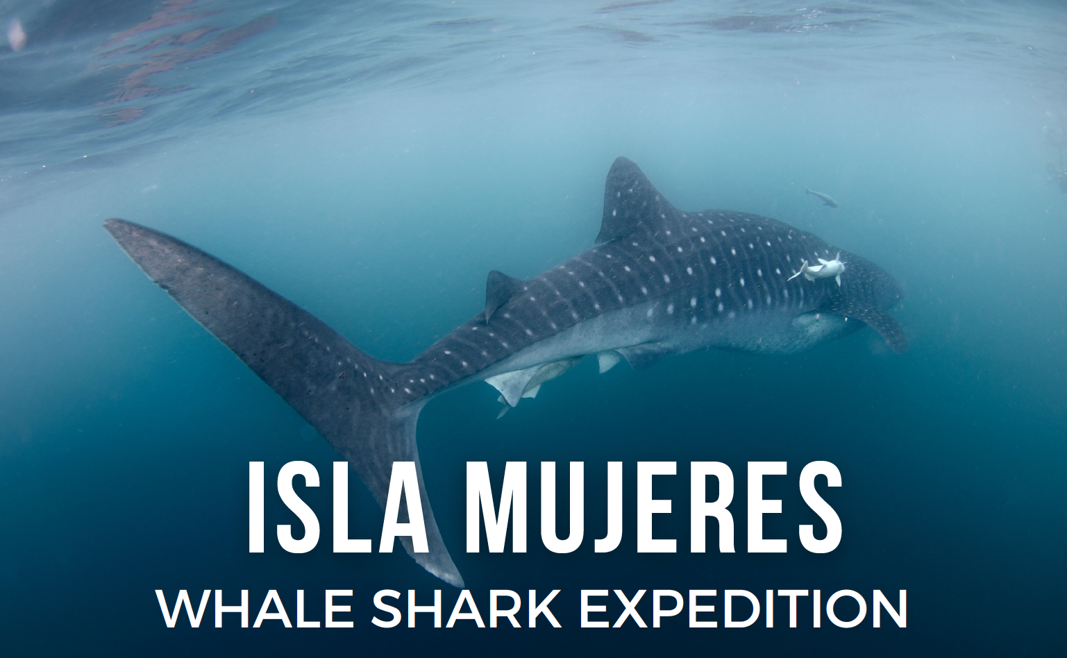 Isla Mujeres with optional Whale Shark Excursion