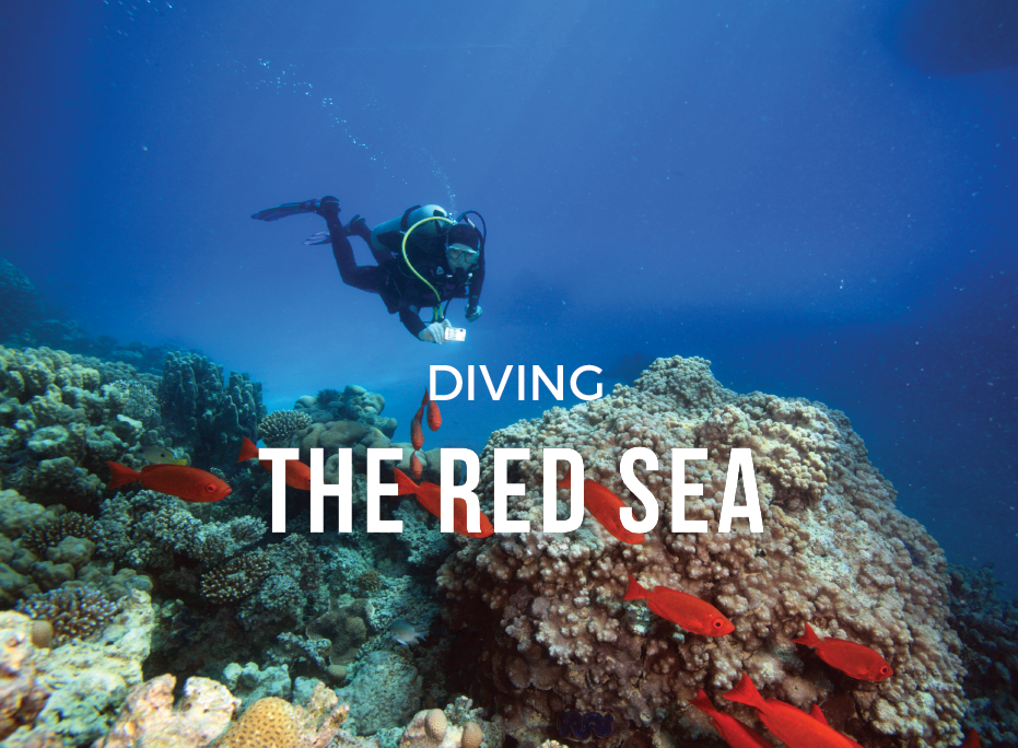 DIVING the Red Sea with MAR Hosted Trips