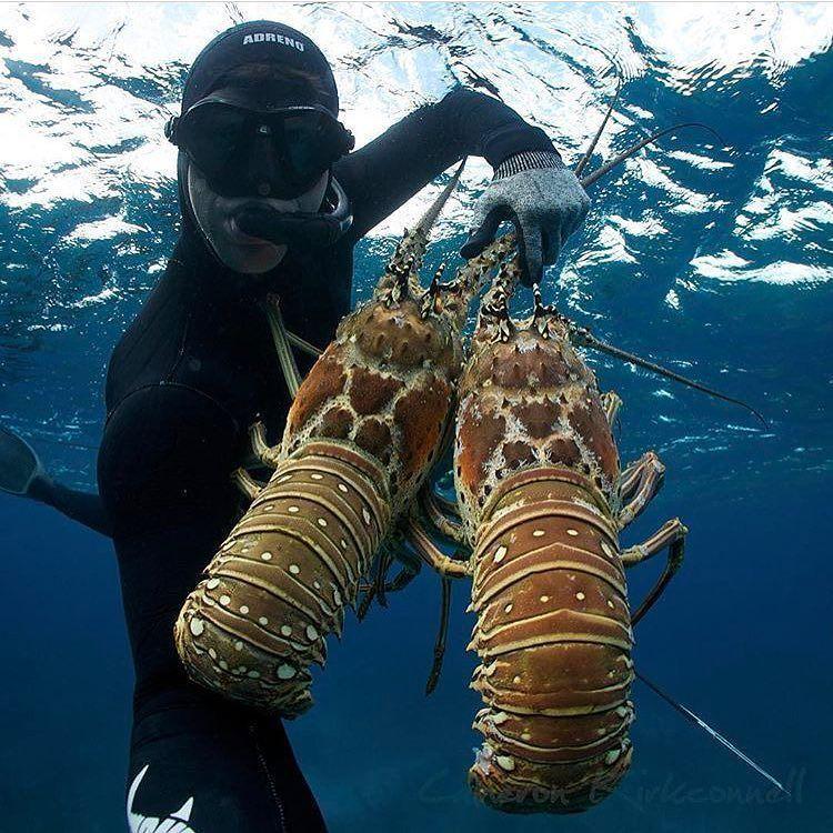 Lobster Dive