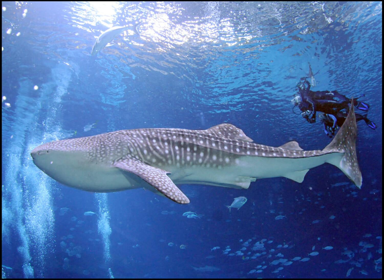 Georgia Aquarium Jan 8-9 2022
