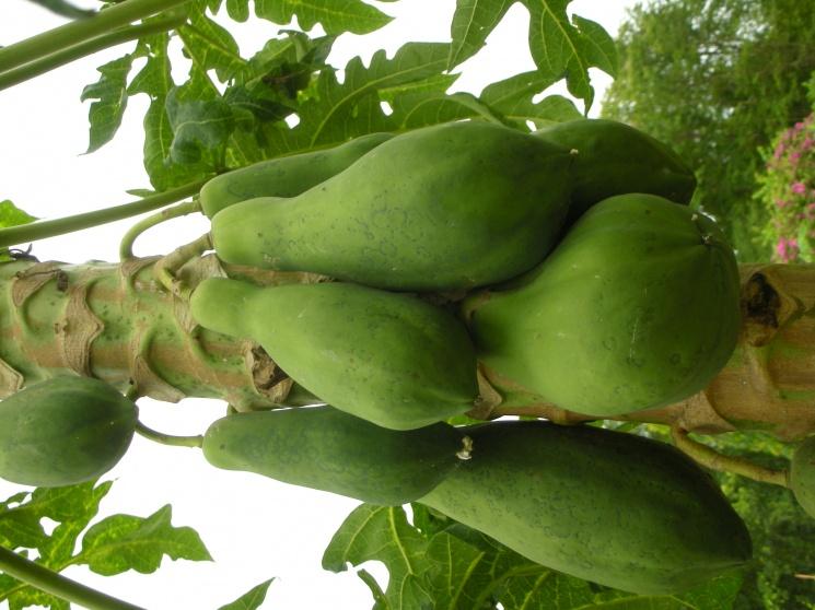 d7edfa3b378cc0ffb126329540c51342 Recipe Thai Green Papaya Salad, 'Som Tum' :: ImportFood