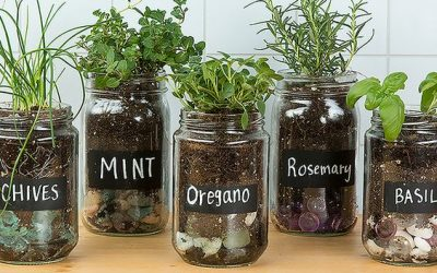 How to Grow Your Own Countertop Herb Garden