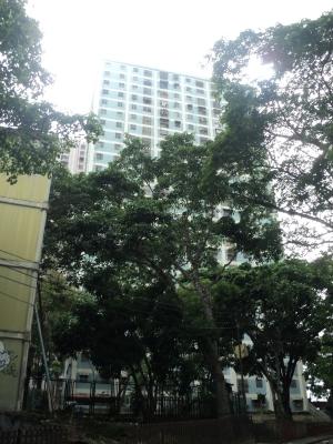 Alquiler de apartamento en Paulo VI Caracas