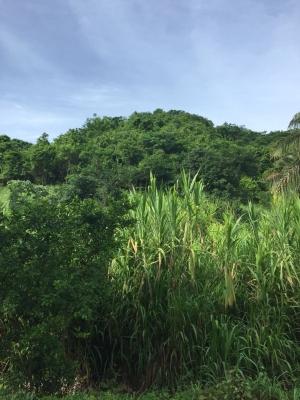 En venta lote de terreno ideal para construir vivienda campestre en ambiente 100% ecológico.