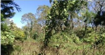 Terreno en venta en Carretera a El Salvador a 500 mts de C.C Decocity
