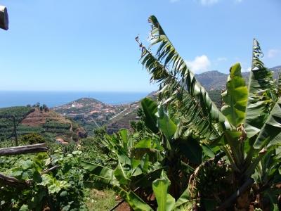 Terrenos em Funchal