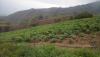 Sucre - Haciendas y Fincas