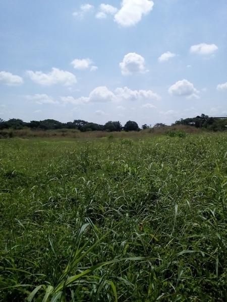 Araure - Terrenos y Parcelas