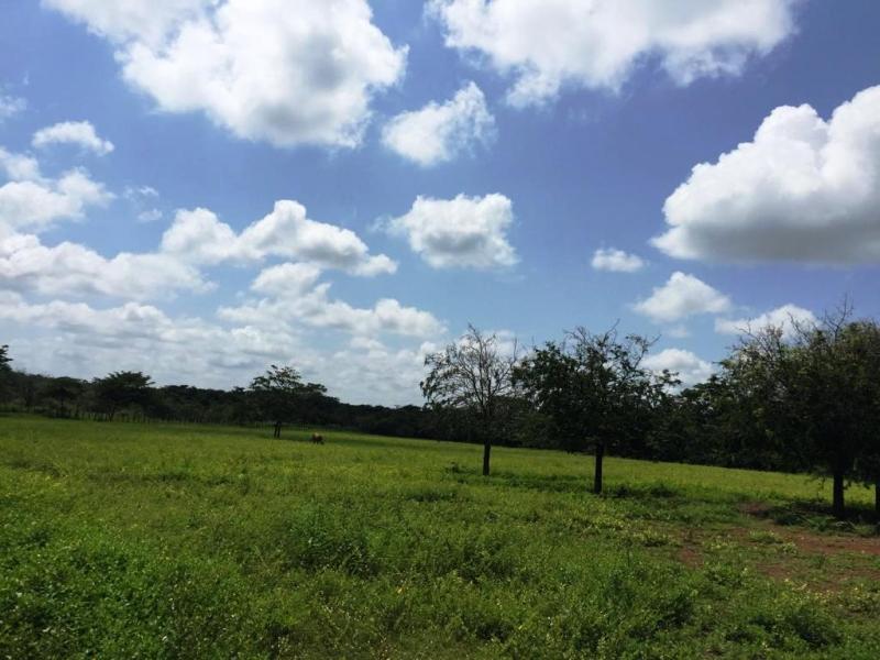 Calabozo - Terrenos y Parcelas