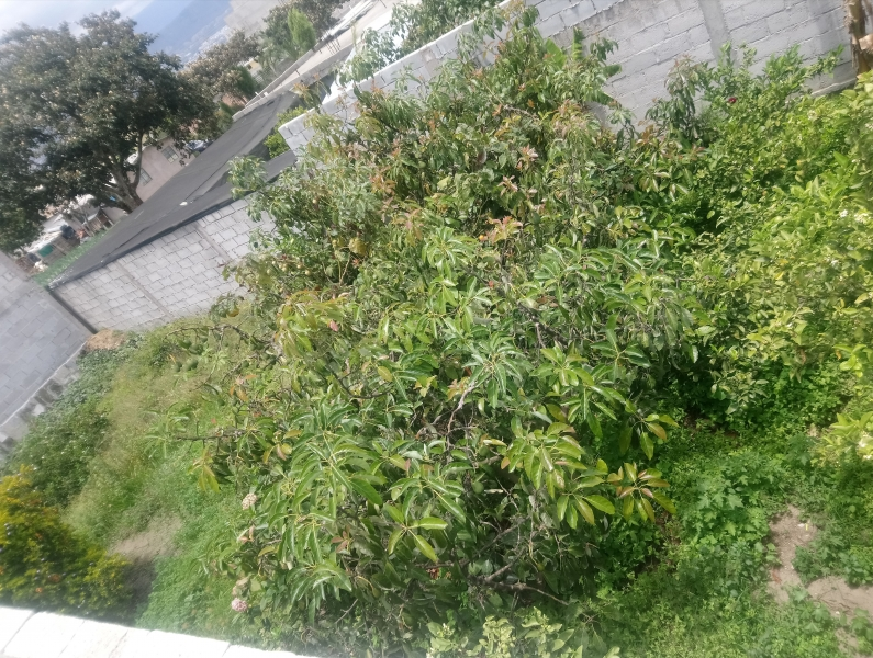 Terreno 216 m2 con frutales