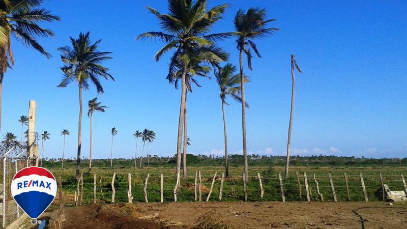 Boca del Tocuyo - Terrenos y Parcelas
