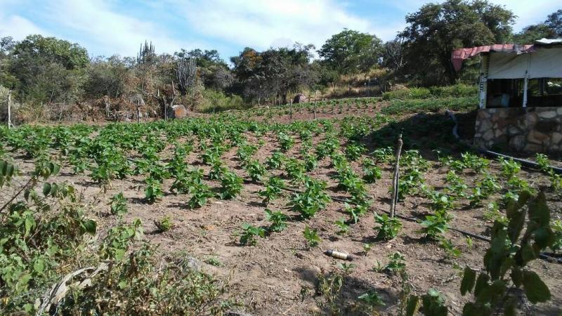 Michelena - Haciendas y Fincas