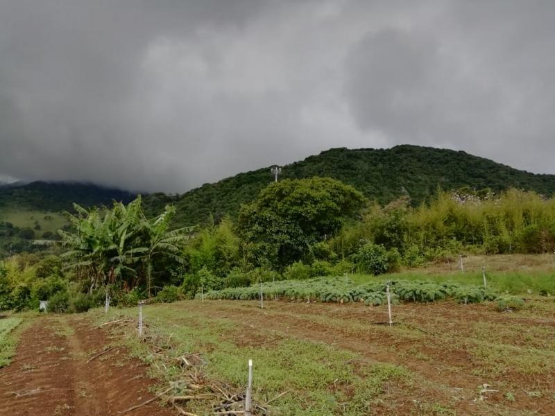 Hermosos terrenos con vistas de ensueño, desde 35$/m2