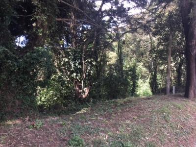 Vendo terreno semi inclinado ideal para desarrollo en Santa Rosalia Santa Catarina Pinula Telefono: 55588097
