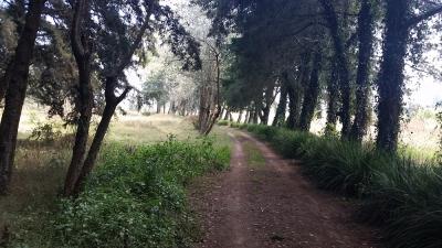 Terreno en San José Pinula, carretera a Residenciales San José, plano casi en su totalidad