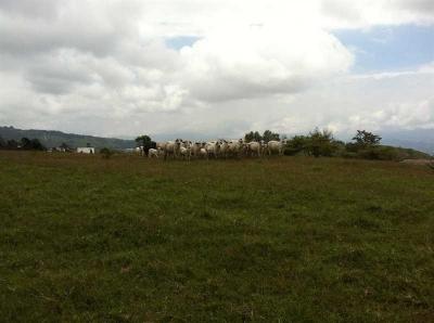 Lote Industrial en Venta, en Ochomongo, Cartago.  REF 2967