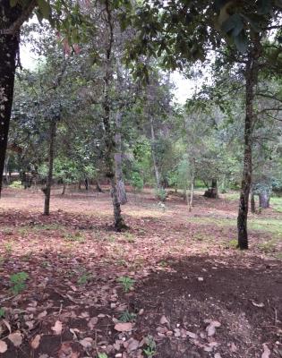 Bonitos terrenos grandes desde 15 x 30 cerca San Lucas