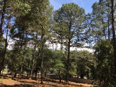 Terrenos grandes desde 15 x 30 a pocos minutos de la Interamericana