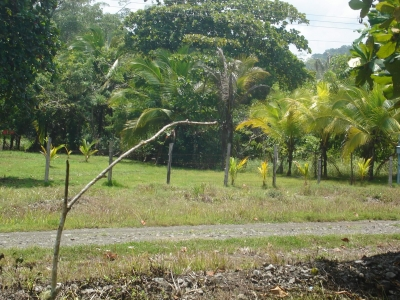Terreno en venta en Guanacaste, Playa Coyote T5-004