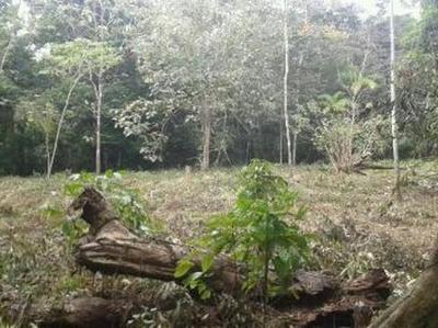 4 hectáreas de tierra TAOBRE Penonomé, ideal para la agricultura