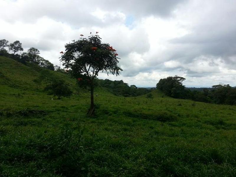 TERRENO DE 7 HECTAREAS, BUGABA CHIRIQUI
