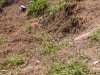 Los Teques - Terrenos y Parcelas