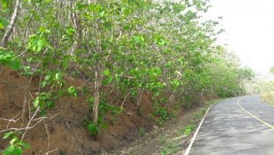 Terreno en el Sur de Sonà (Provincia de Veraguas), Despues del Tigre De Los Amarillos