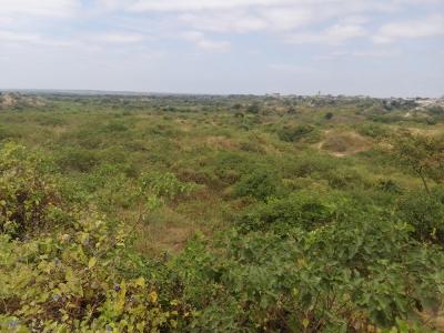 Exclusivos terrenos agrícolas  35 hectareas
