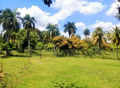 Finca orgánica en Mata Naranjos, El Hatillo, San Cristóbal 43,479m2 / 69,13