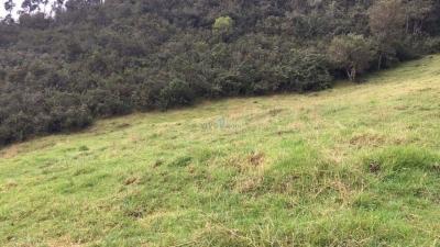 terreno de 5 hectareas en venta