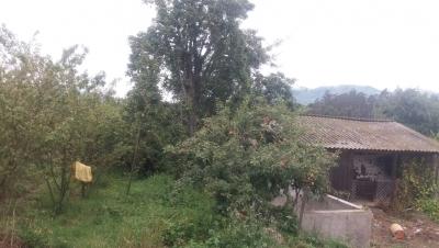 Terreno con arboles frutales en Palahua el Carmen