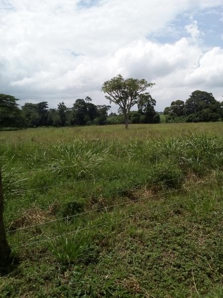 Manzanita - Haciendas y Fincas