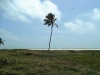 Sanare - Terrenos y Parcelas