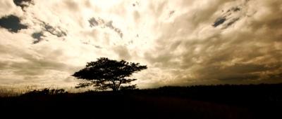 CasaMax vende Gran Terreno en sector Los Arrayanes ubicado en Puembo