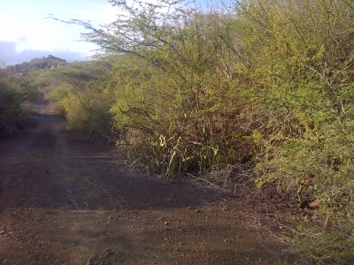 Exclusivo Terreno en Pampatar