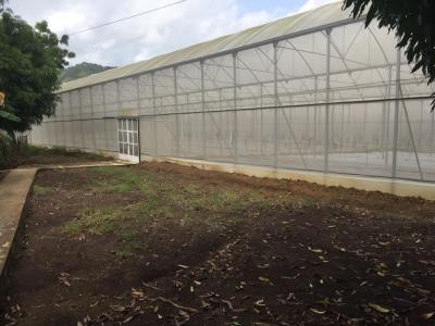 SOLAR DE 50 Tareas de Invernaderos en la Carretera Duarte