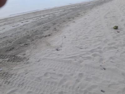 Se Vende En La Playa de Coson Las terrenas, Samana